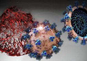 کشف داروی جدیدی که کرونا ویروس را در مراحل اولیه نابود میکند